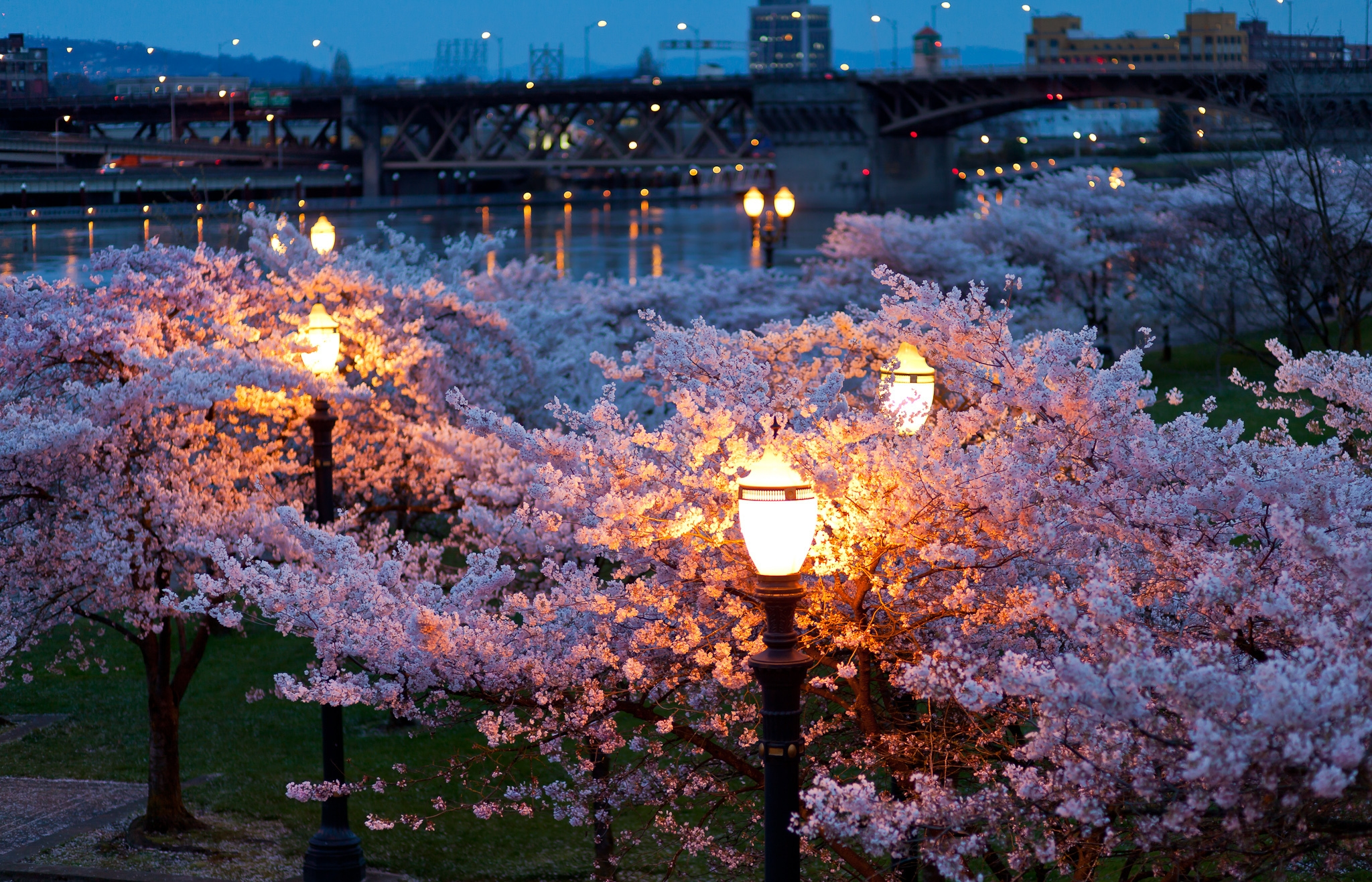 76162 download wallpaper Cities, Rivers, Bridges, Trees, Night, City, Lights, Park, Lanterns, Bloom, Color, Evening, Spring screensavers and pictures for free