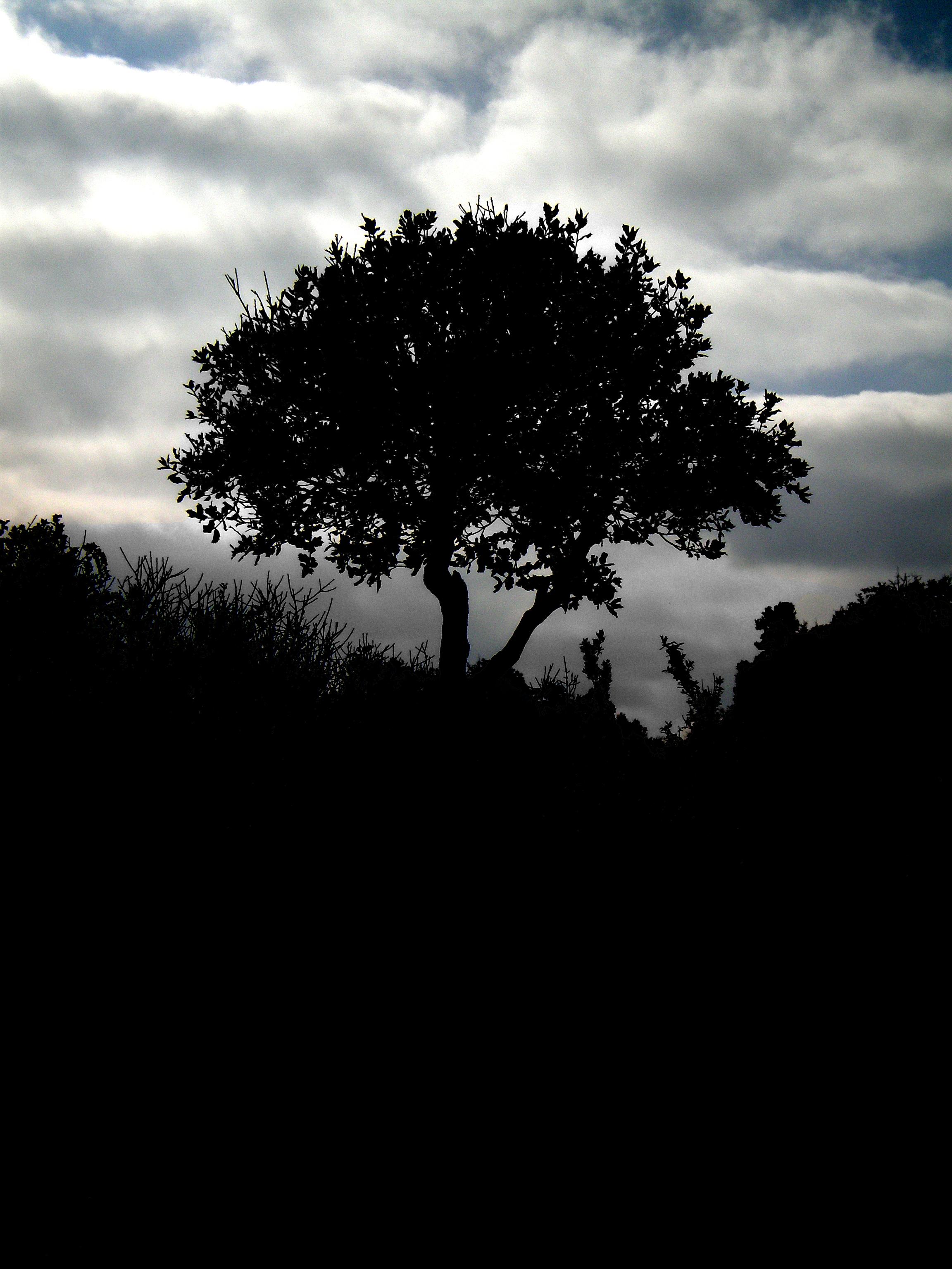 84780 скачать обои Природа, Дерево, Силуэт, Ночь, Облака, Трава - заставки и картинки бесплатно