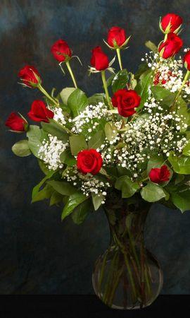 3779 descargar fondo de pantalla Plantas, Flores, Roses: protectores de pantalla e imágenes gratis