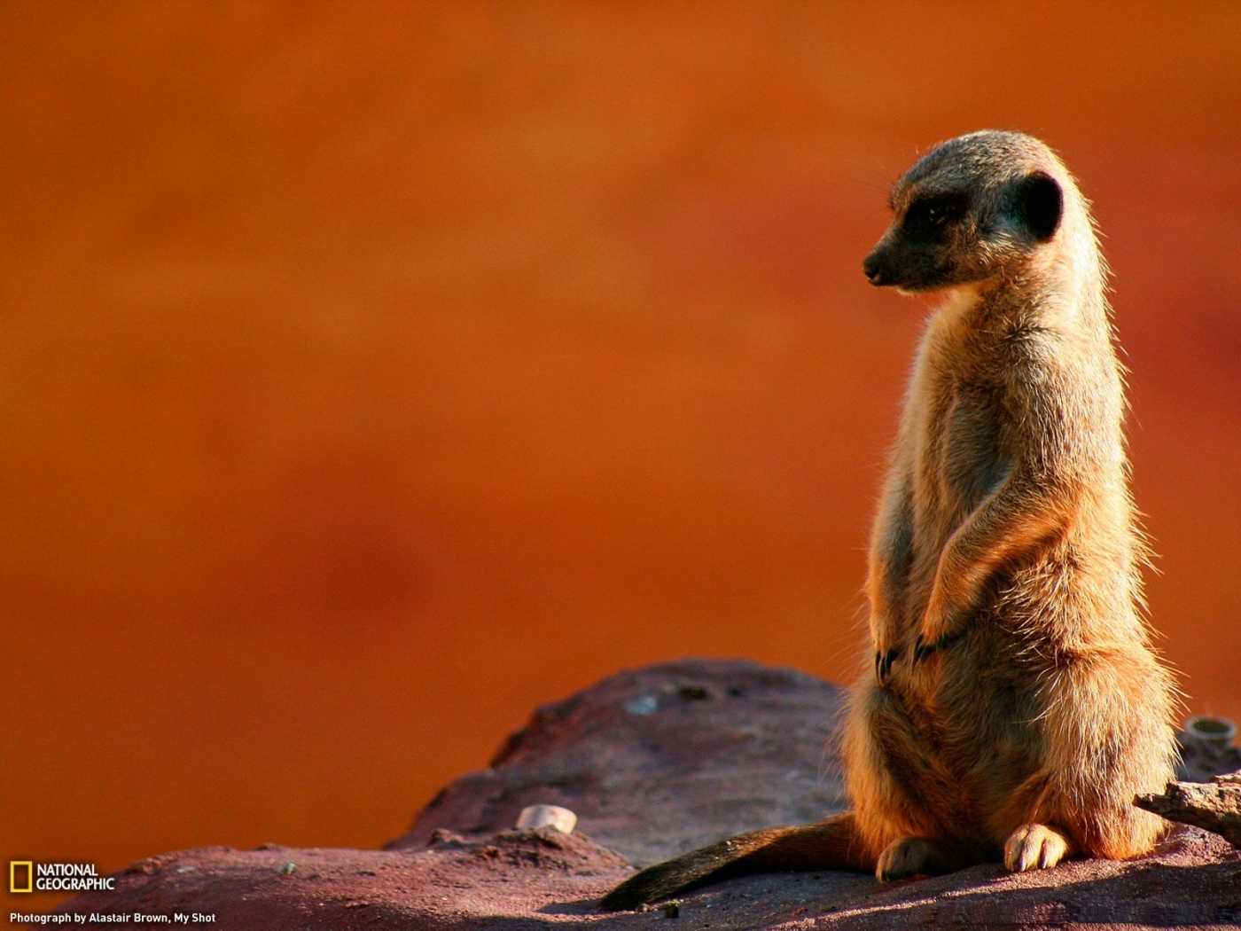 27900 Screensavers and Wallpapers Rodents for phone. Download Animals, Rodents pictures for free