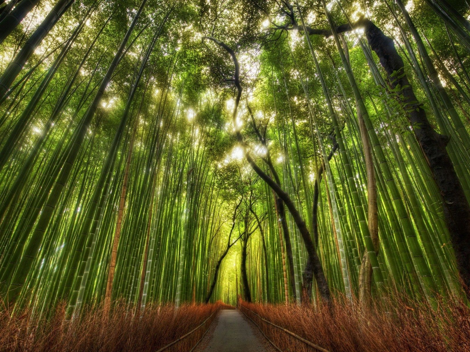 89276 download wallpaper Nature, Bamboo, Forest, Tops, Vertex, Trail, Path screensavers and pictures for free