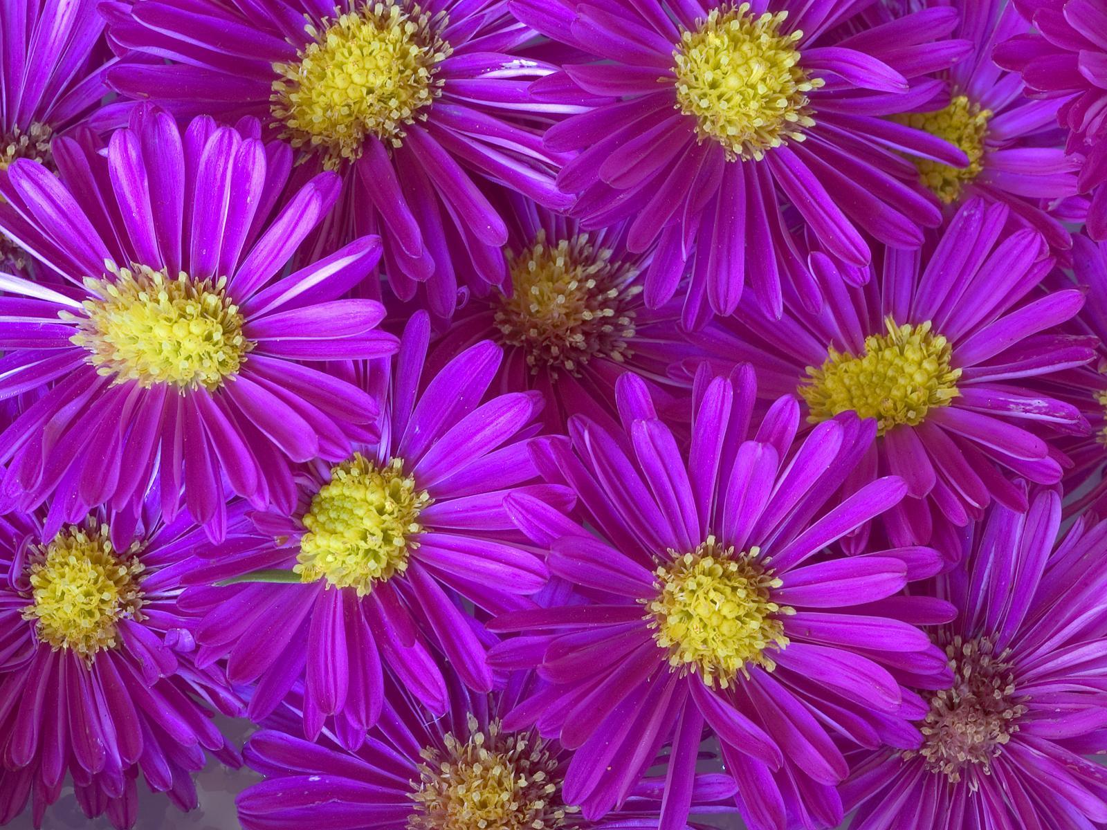 13172 скачать обои Растения, Цветы, Фон - заставки и картинки бесплатно