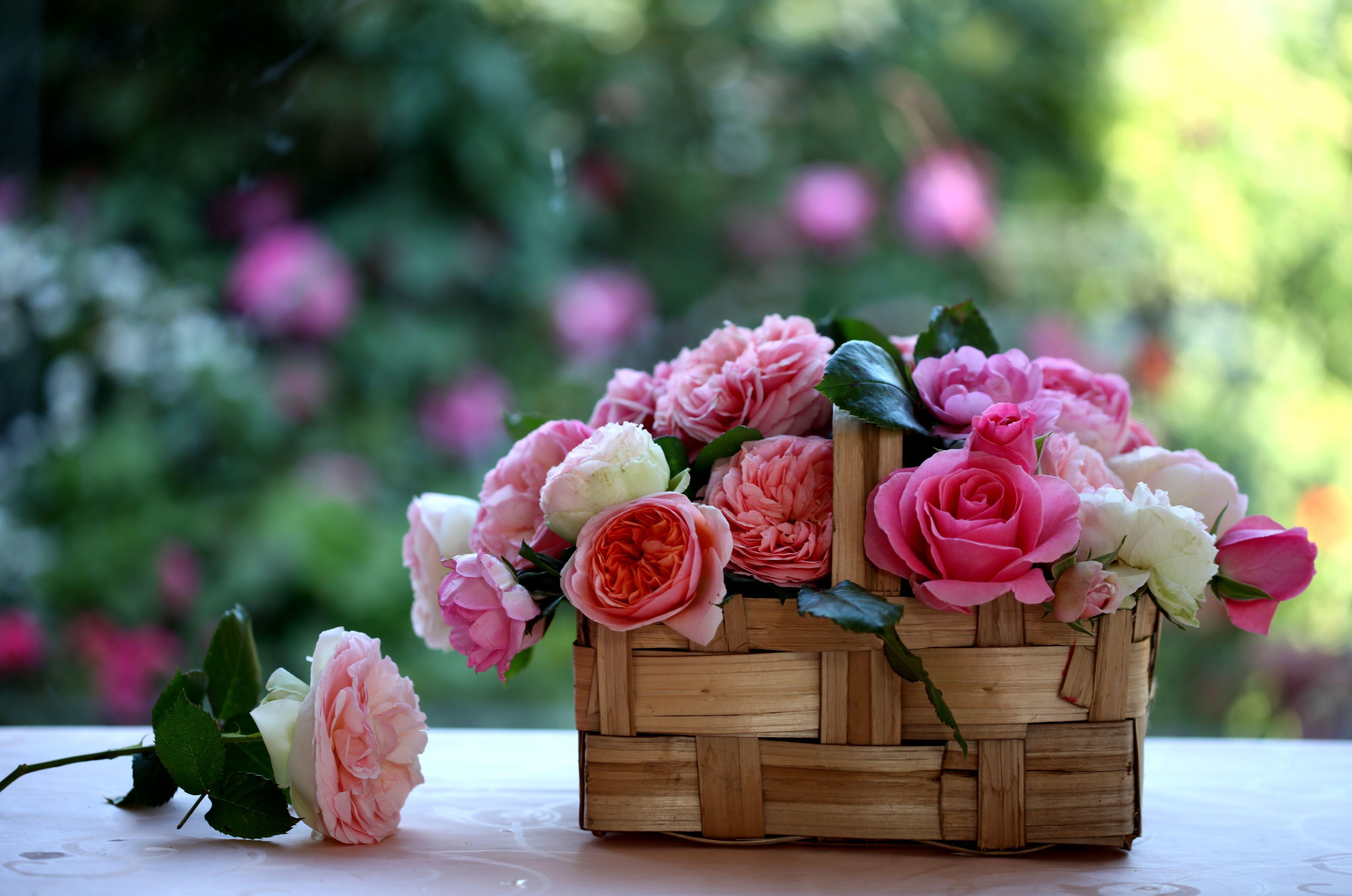 89082 скачать обои Бутоны, Цветы, Розы, Размытость, Корзина - заставки и картинки бесплатно