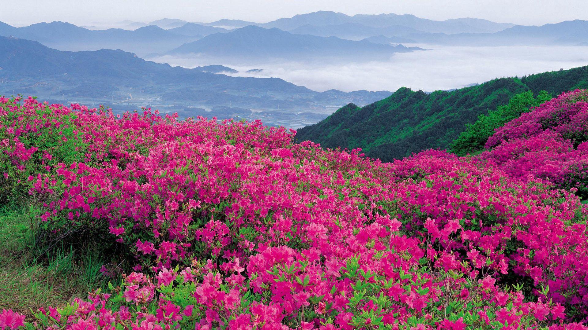 65299 скачать обои Даль, Природа, Горы, Цветы - заставки и картинки бесплатно