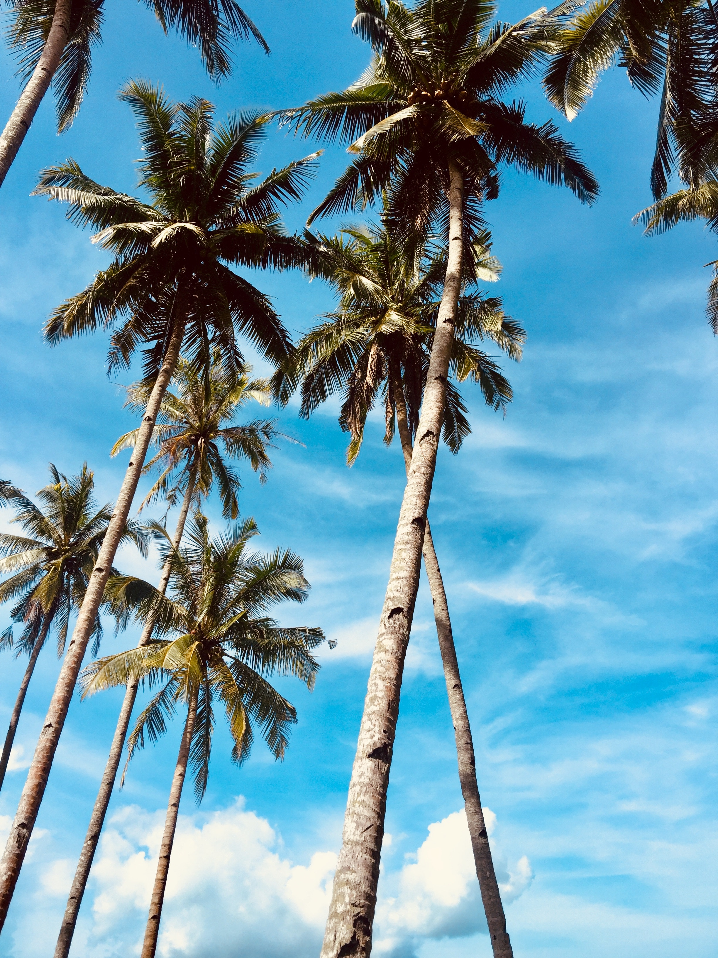 136630 download wallpaper Nature, Sky, Tropics, Trees, Palms screensavers and pictures for free