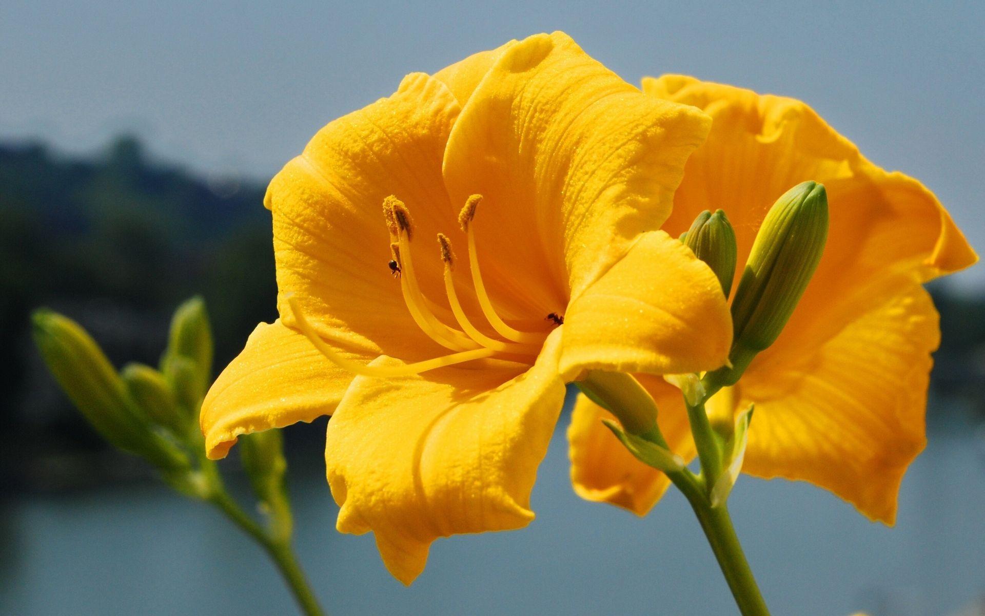 hintergrundbild für handys pflanzen blumen 36154 bild