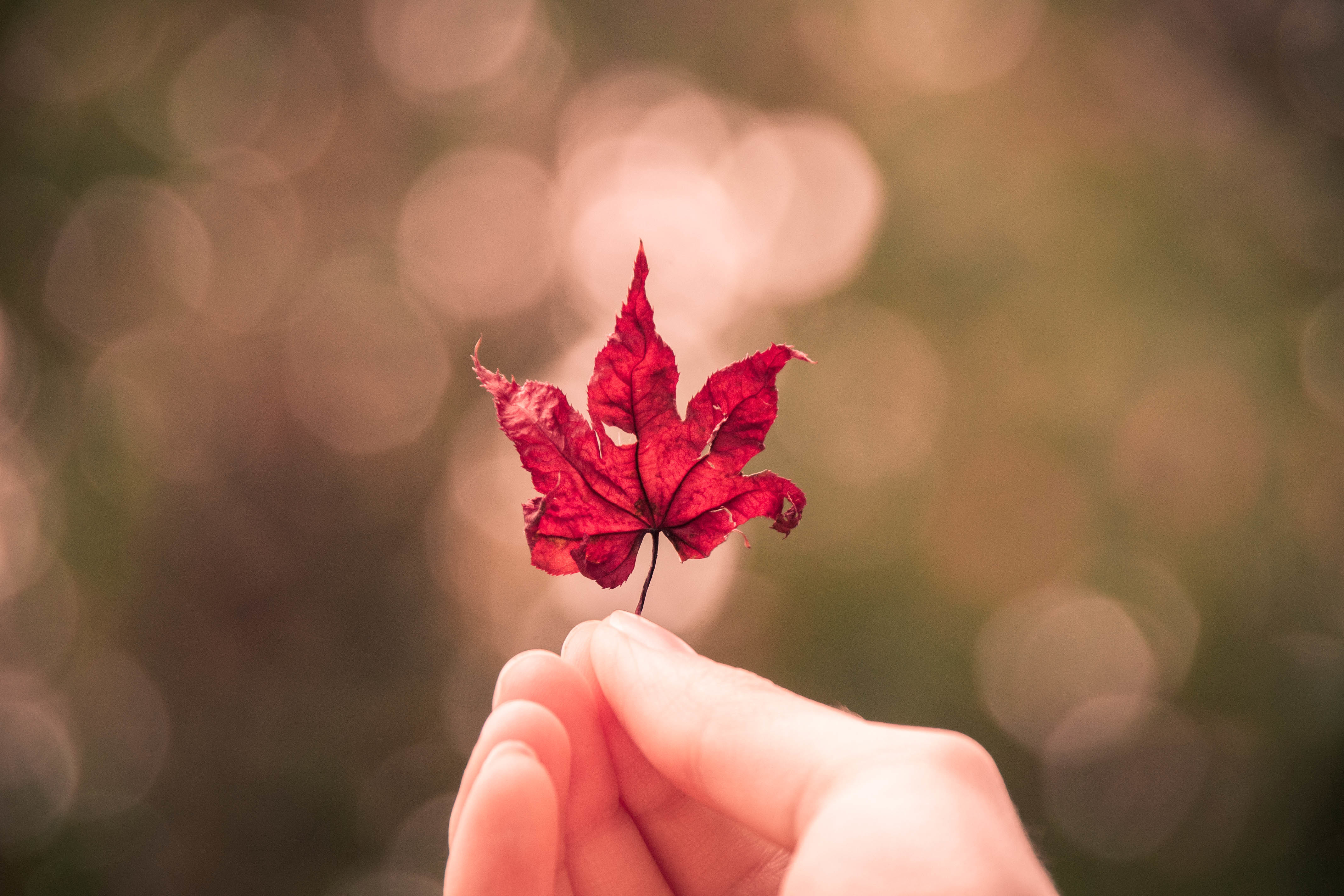 135549 Screensavers and Wallpapers Hand for phone. Download Macro, Sheet, Leaf, Maple, Hand, Glare pictures for free