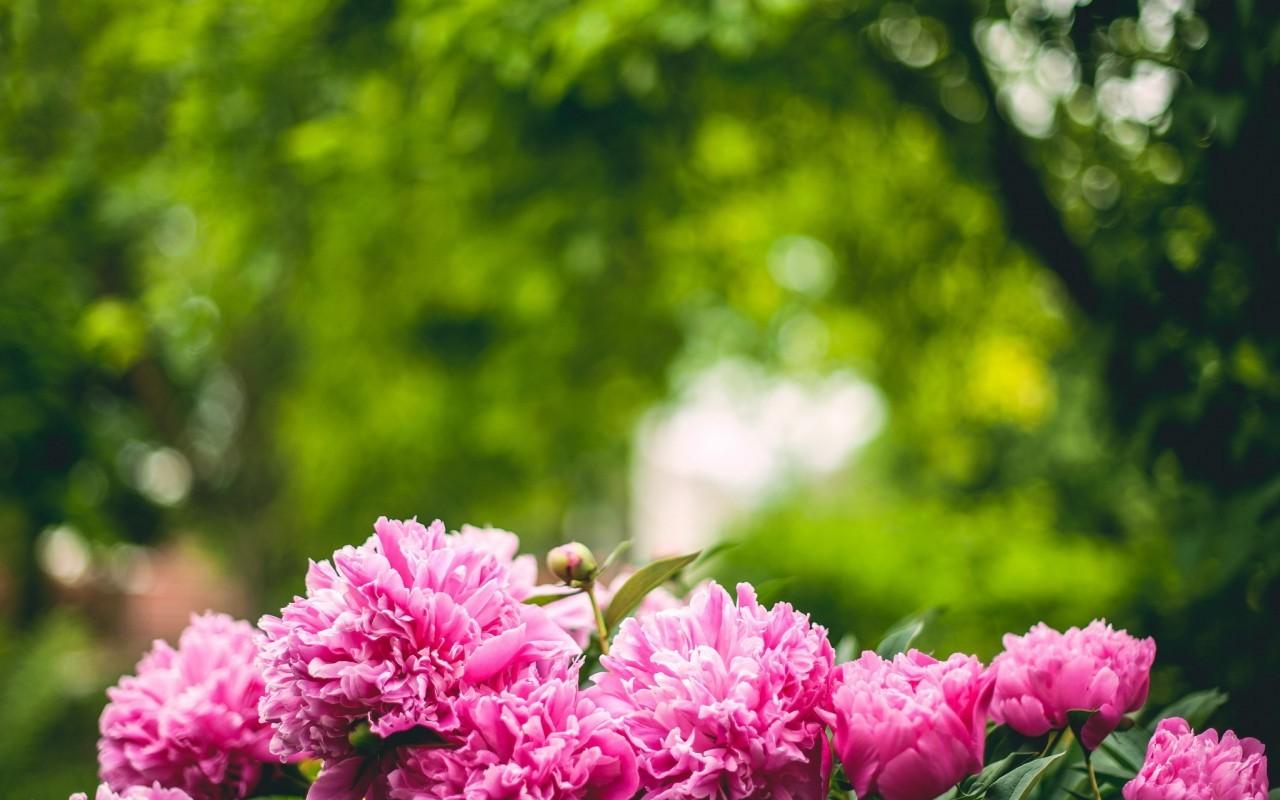 21114 скачать обои Растения, Цветы - заставки и картинки бесплатно