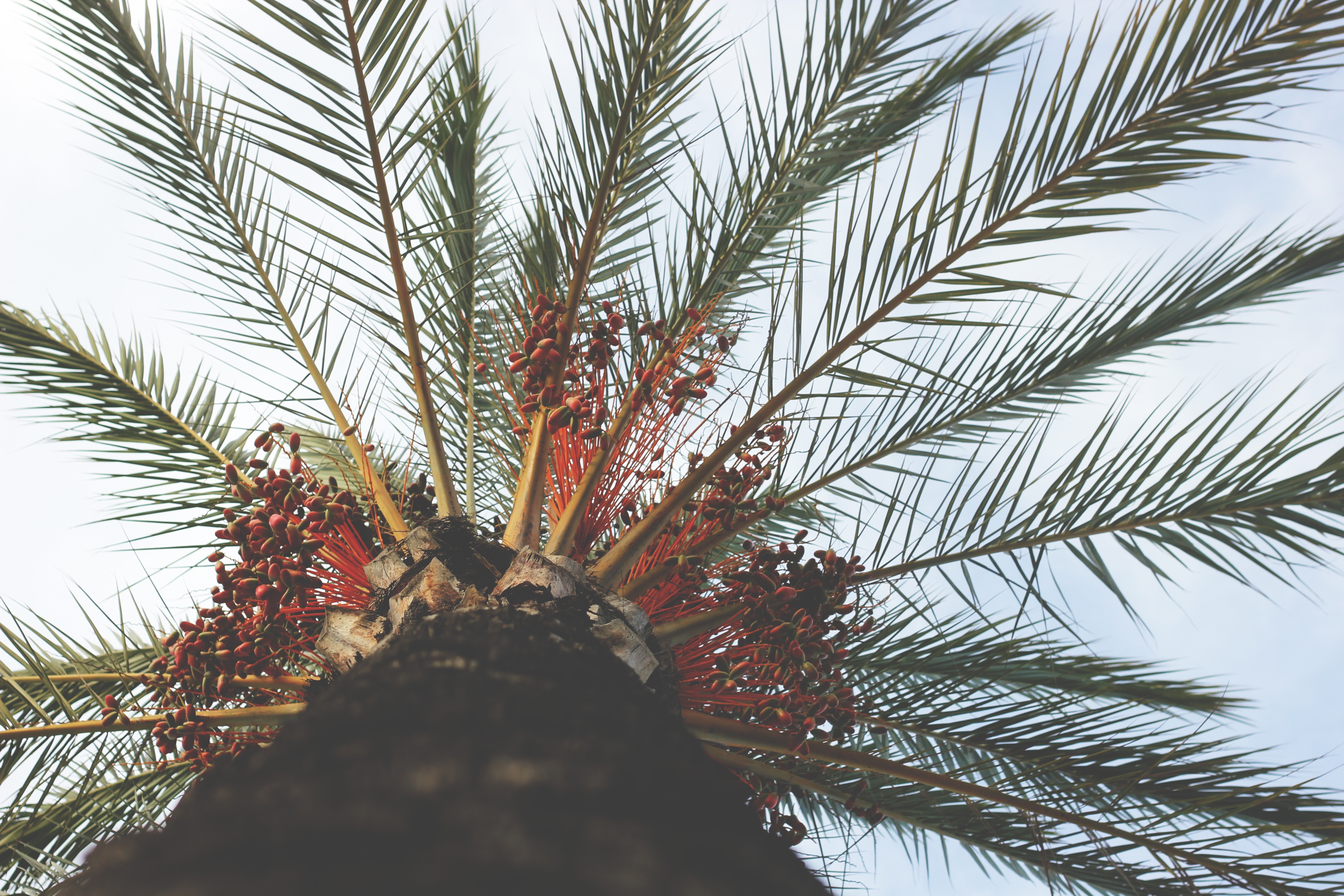 115555 download wallpaper Nature, Palm, Wood, Tree, Bottom View, Tropics, Branches, Trunk screensavers and pictures for free
