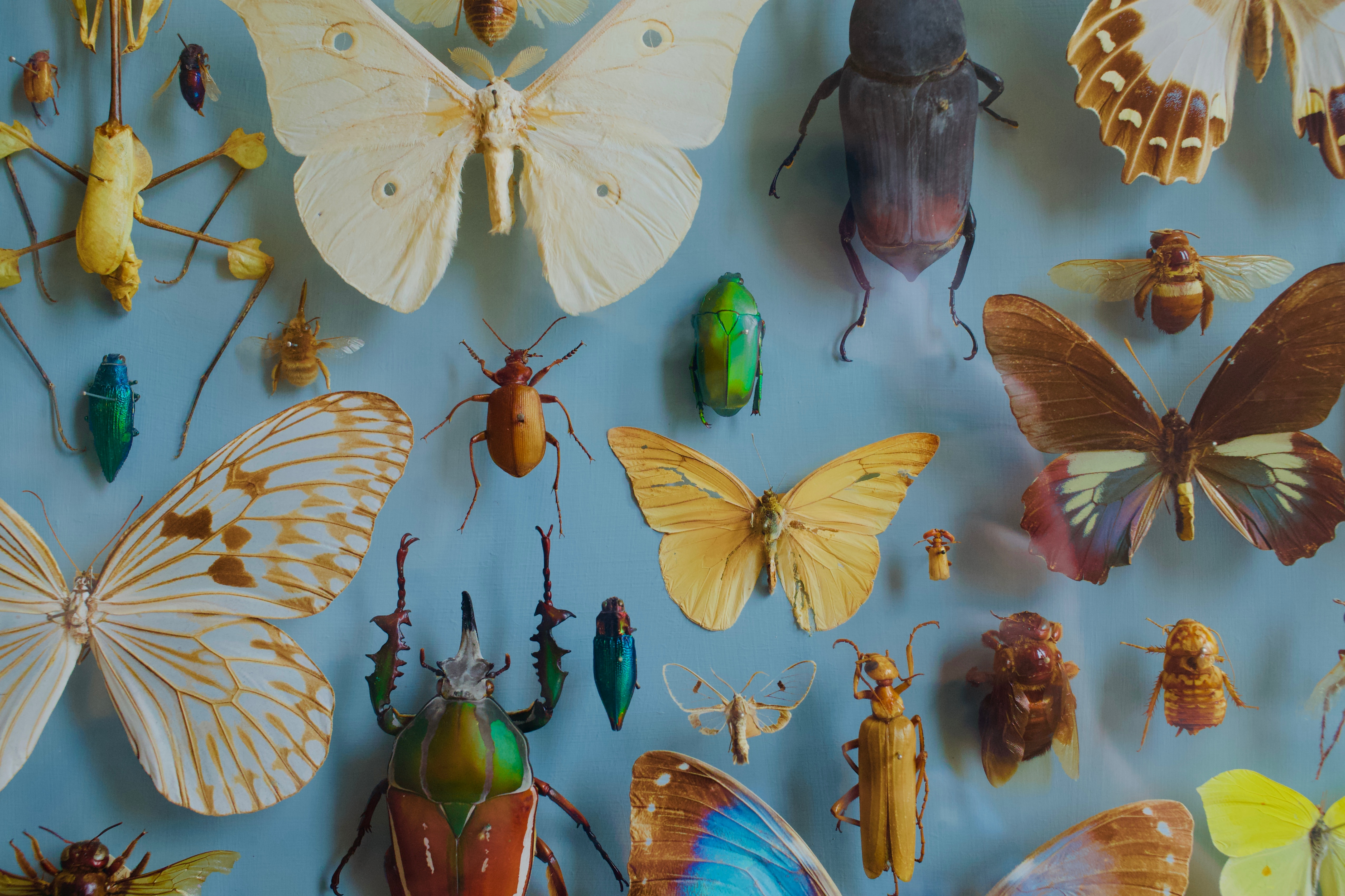 114664 download wallpaper Miscellanea, Miscellaneous, Collection, Butterflies, Bugs, Decoration, Insects screensavers and pictures for free