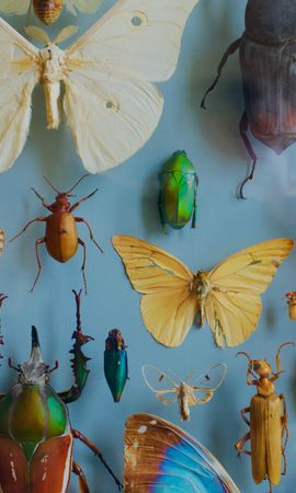 114664 Screensavers and Wallpapers Insects for phone. Download Miscellanea, Miscellaneous, Collection, Butterflies, Bugs, Decoration, Insects pictures for free