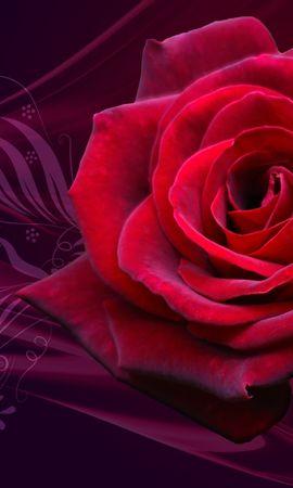 42509 скачать обои Растения, Фон, Розы - заставки и картинки бесплатно