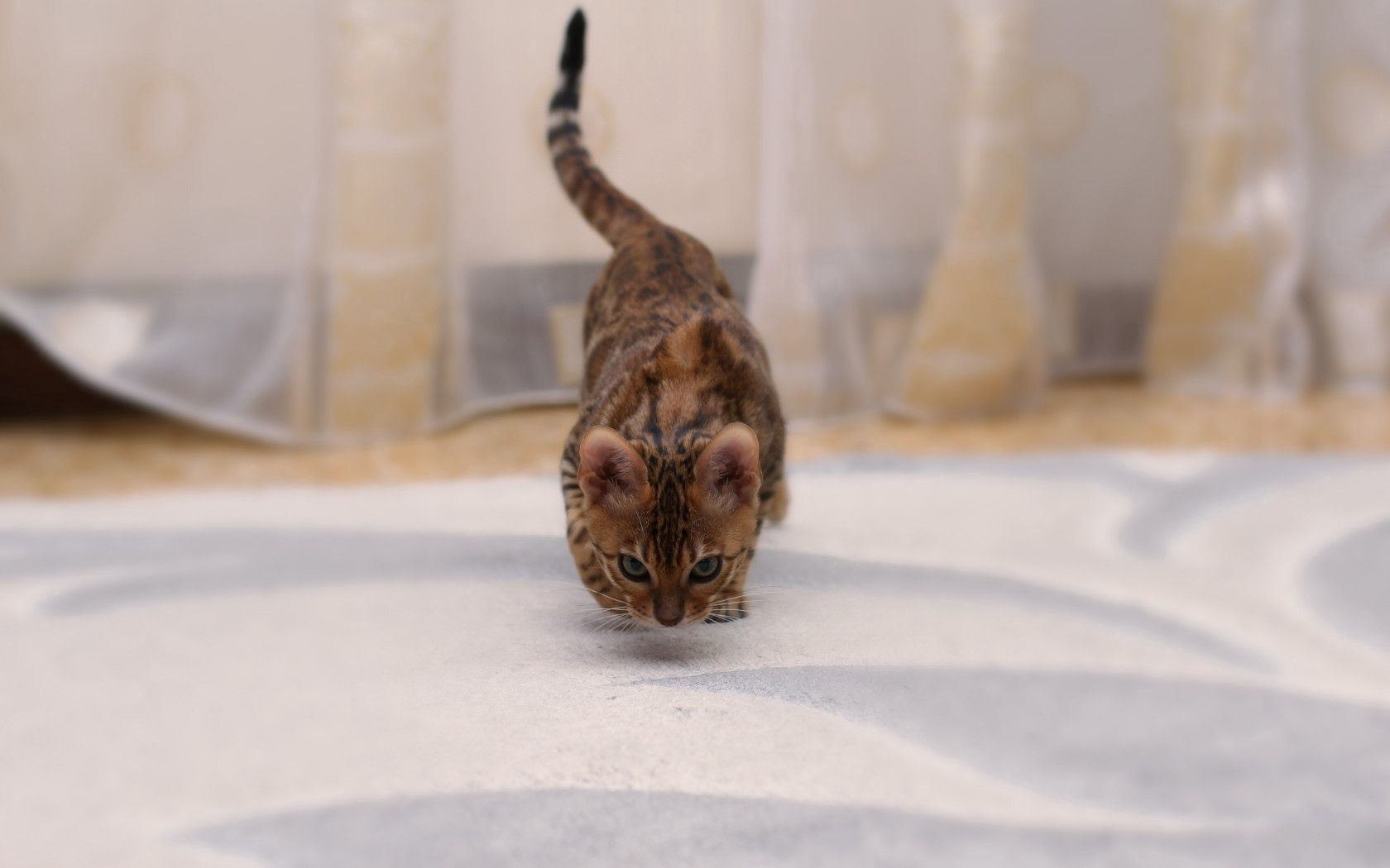 124236 download wallpaper Animals, Bengal Cat, Cat, Spotted, Spotty screensavers and pictures for free
