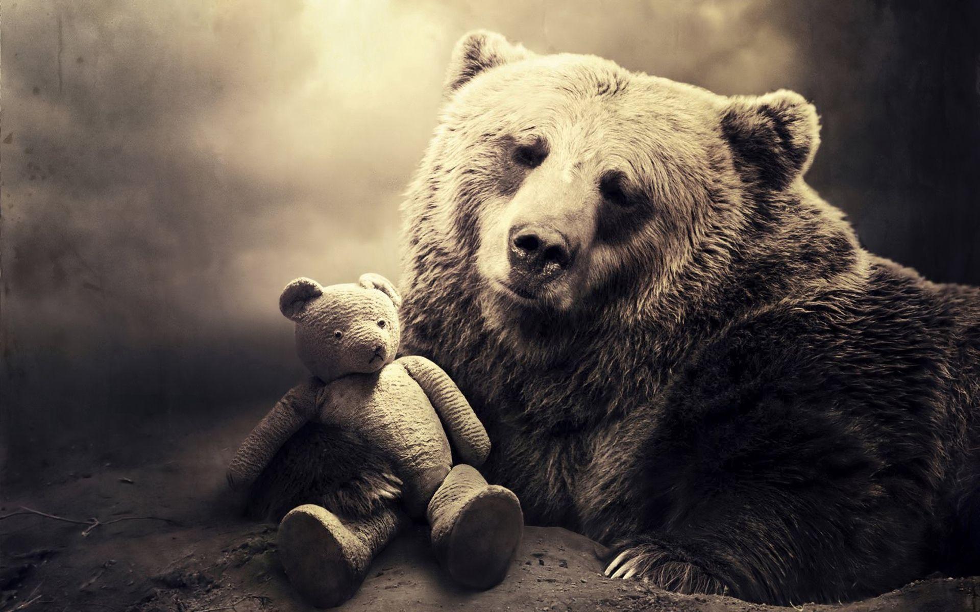 128748 скачать обои Животные, Морда, Медведь, Игрушка, Тень, Чб, Сепия - заставки и картинки бесплатно