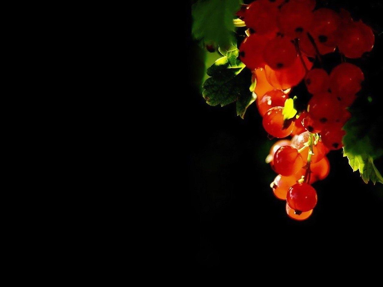 30092 Заставки и Обои Смородина на телефон. Скачать Растения, Ягоды, Смородина картинки бесплатно