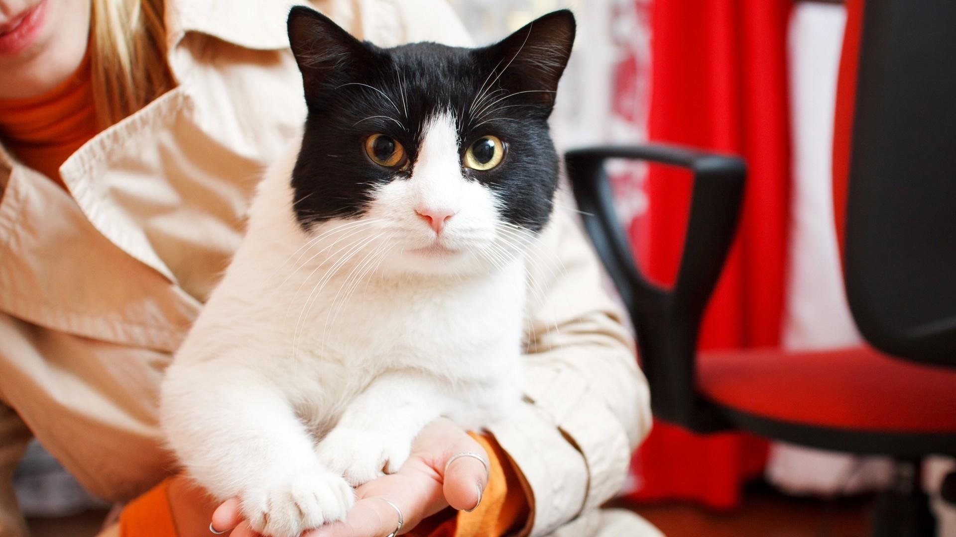 25282 скачать обои Животные, Кошки (Коты, Котики) - заставки и картинки бесплатно
