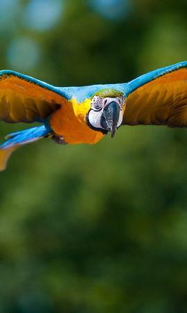 47239 baixar papel de parede Animais, Aves, Papagaios - protetores de tela e imagens gratuitamente