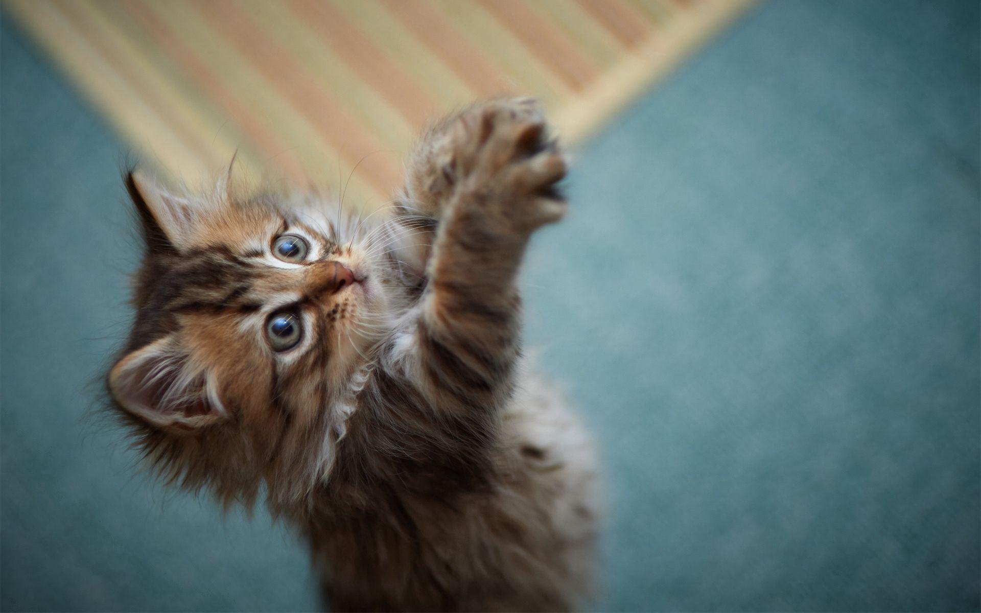 手機的65817屏保和壁紙游戏。 免費下載 动物, 猫咪, 小猫, 游戏, 爪子, 毛皮, 蓬松的, 蓬松 圖片