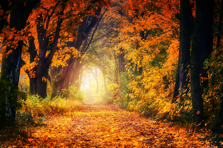 93495 скачать обои Осень, Парк, Природа, Листва, Деревья, Свет, Тропинка, Золотистый - заставки и картинки бесплатно