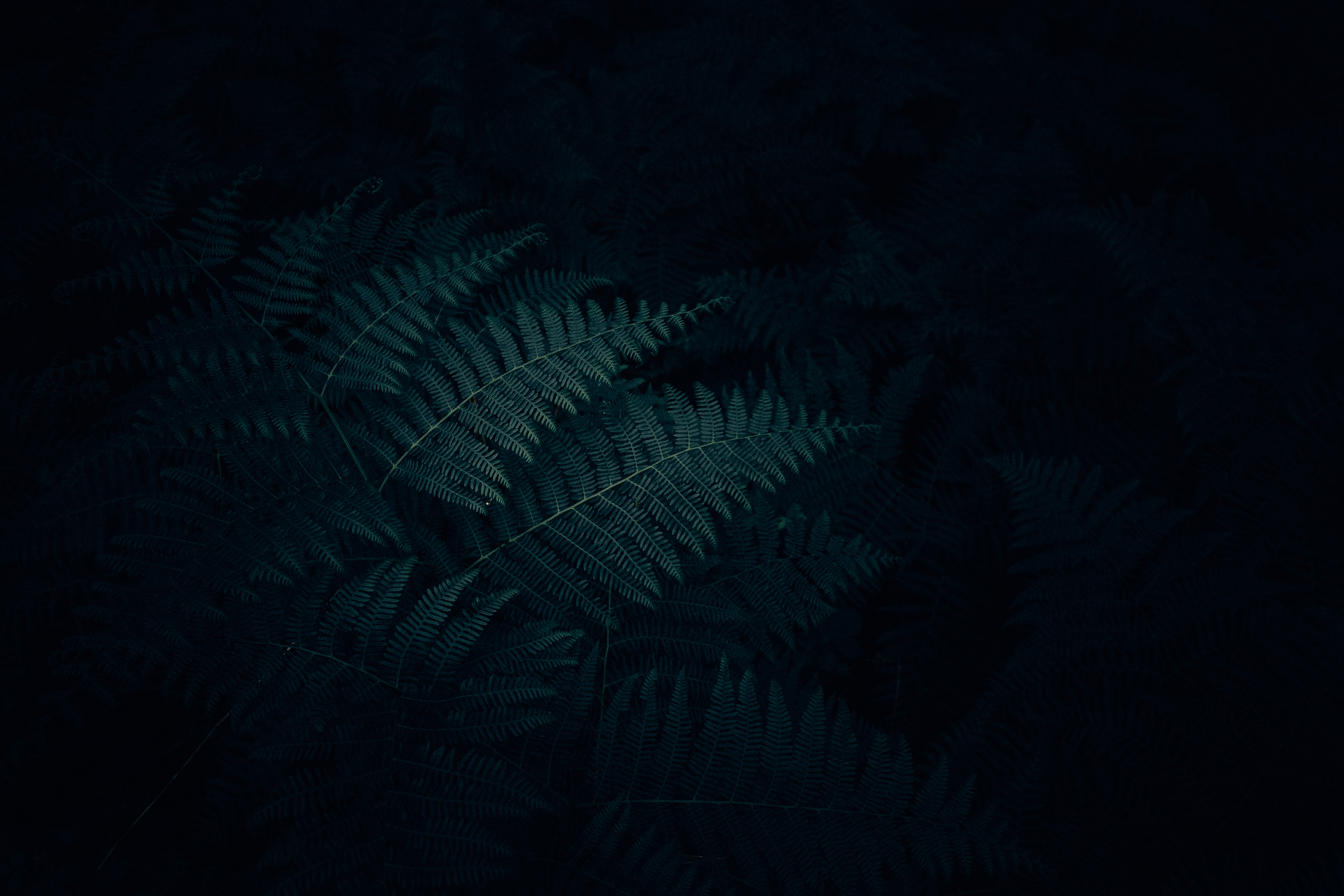 115235 download wallpaper Leaves, Nature, Plant, Dark, Fern, Carved screensavers and pictures for free