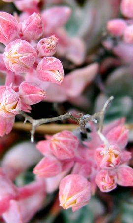 14434 скачать обои Растения, Цветы - заставки и картинки бесплатно