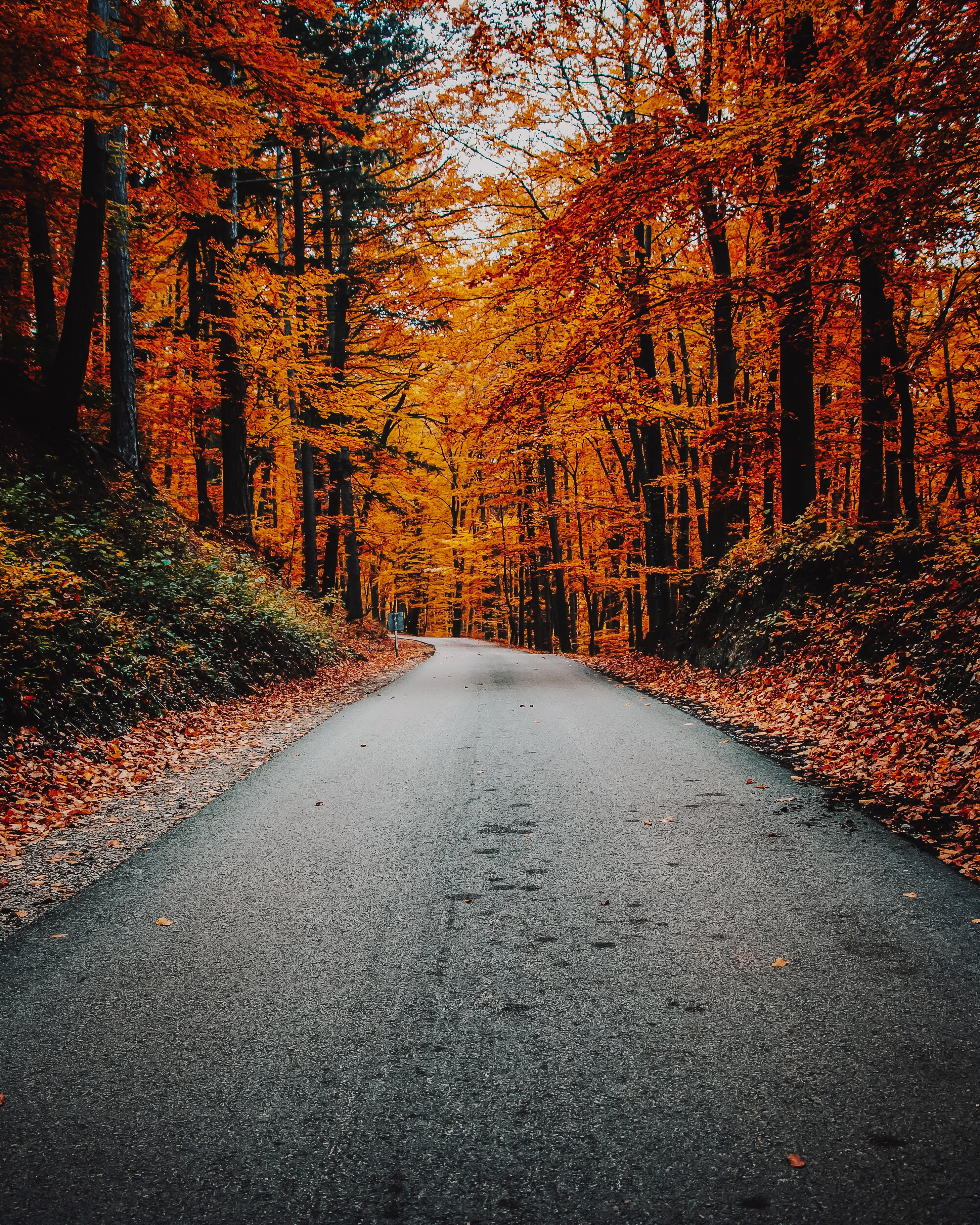 72585 download wallpaper Nature, Autumn, Road, Turn, Asphalt, Foliage screensavers and pictures for free
