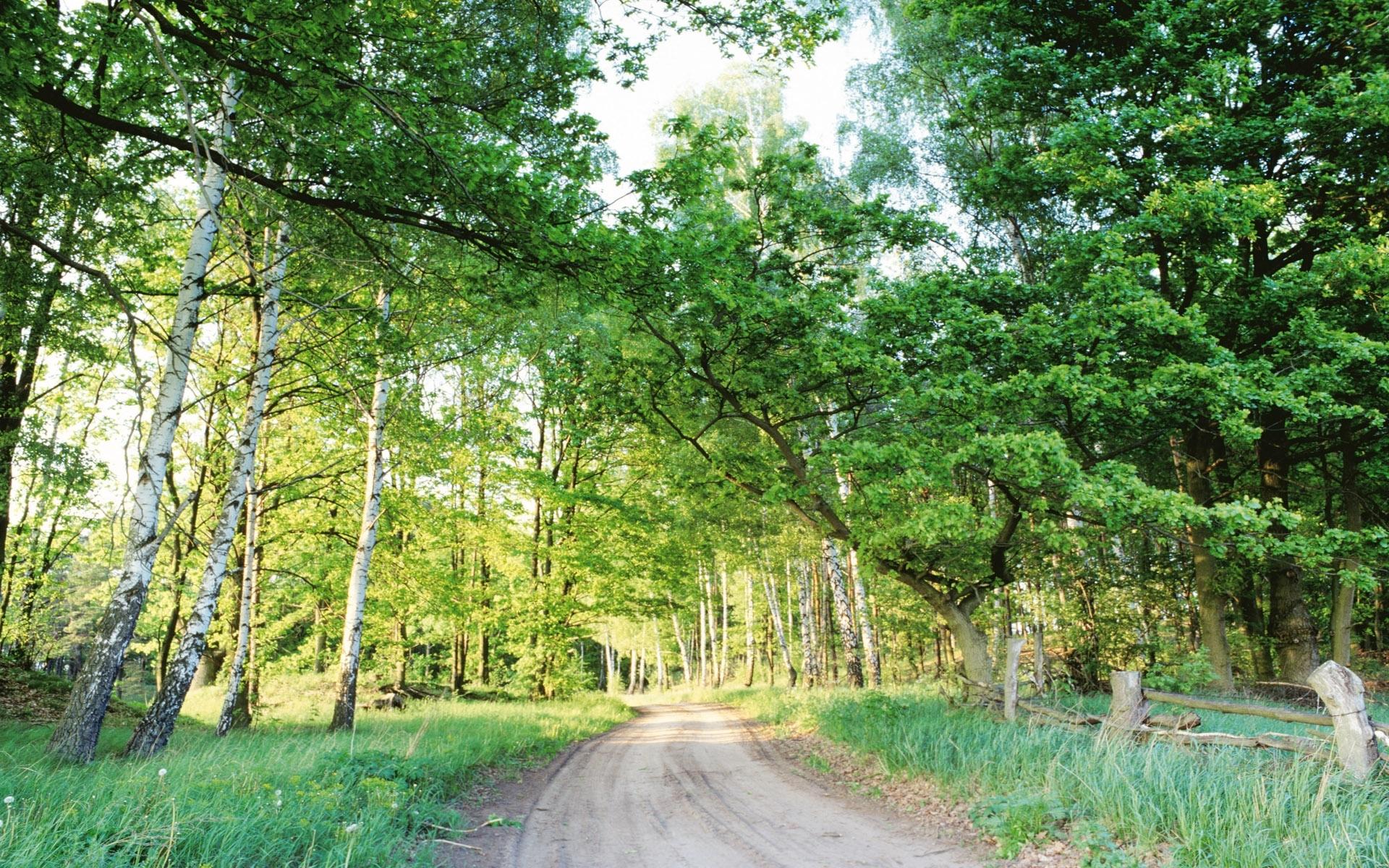 Handy-Wallpaper Pflanzen, Landschaft, Bäume, Roads kostenlos herunterladen.