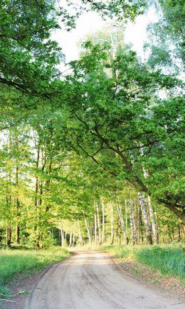 440 скачать обои Растения, Пейзаж, Деревья, Дороги - заставки и картинки бесплатно