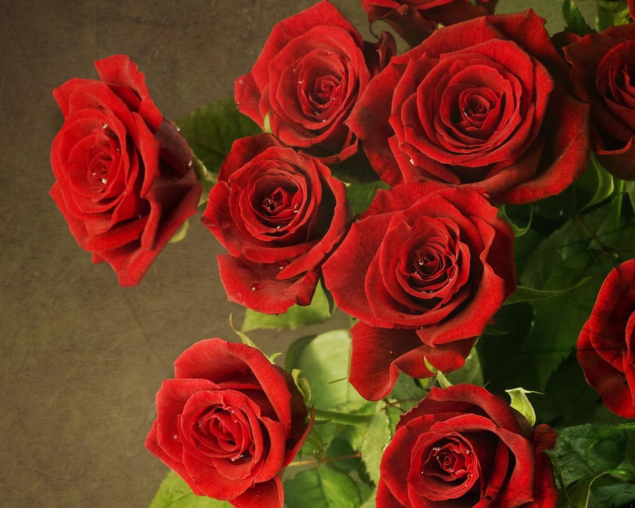 16232 скачать обои Растения, Цветы, Розы - заставки и картинки бесплатно