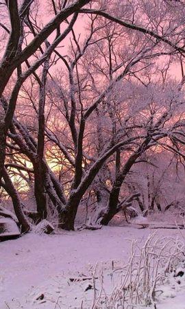 8073 скачать обои Пейзаж, Зима, Деревья, Снег, Рассвет - заставки и картинки бесплатно