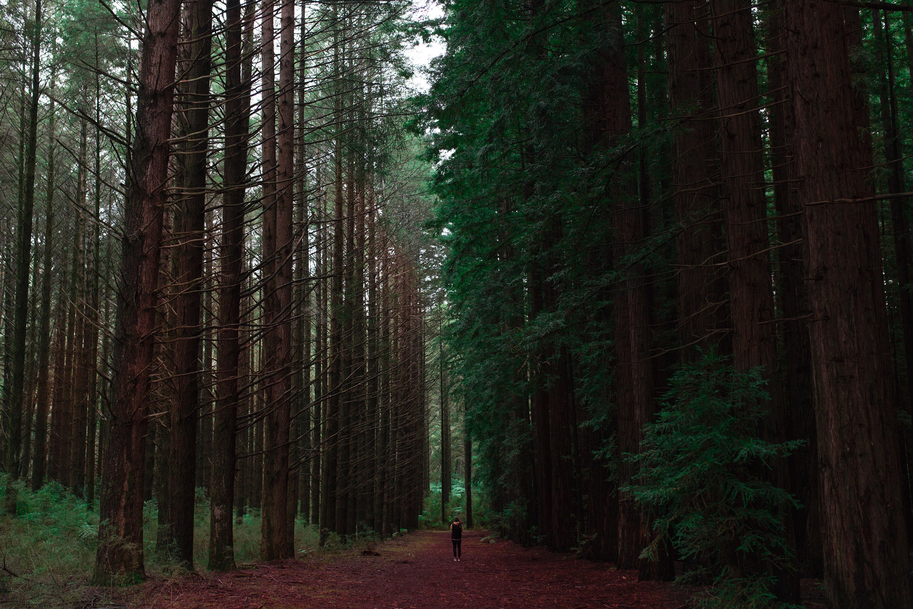119501 Screensavers and Wallpapers Human for phone. Download Nature, Trees, Forest, Human, Person, Loneliness pictures for free