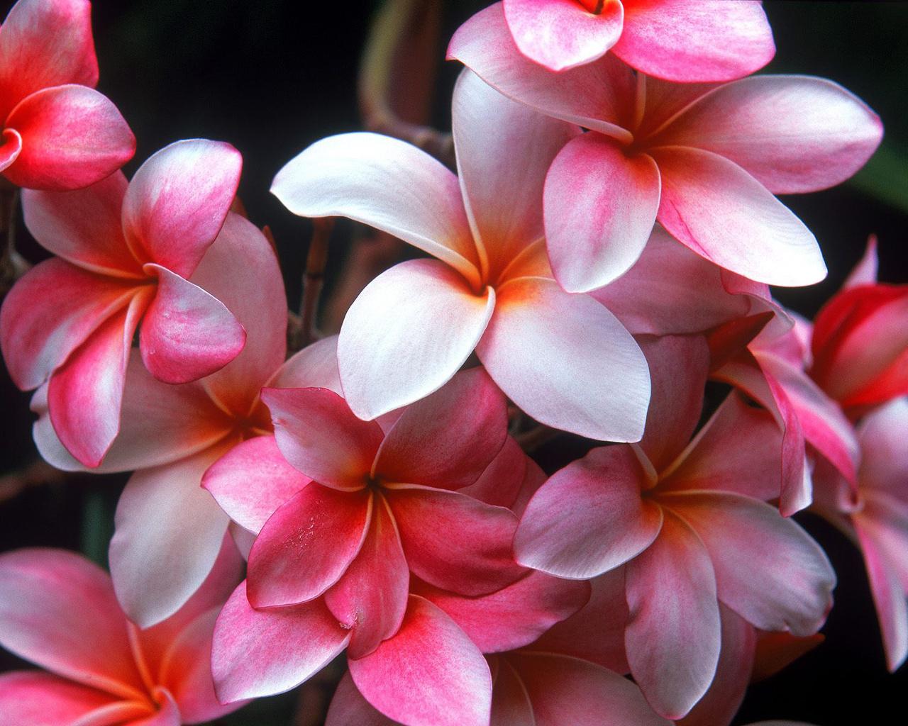 15541 скачать обои Растения, Цветы, Фон - заставки и картинки бесплатно