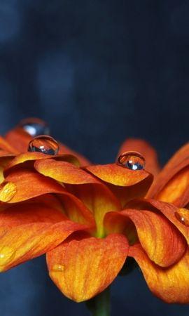 41212 descargar fondo de pantalla Plantas, Flores, Drops: protectores de pantalla e imágenes gratis