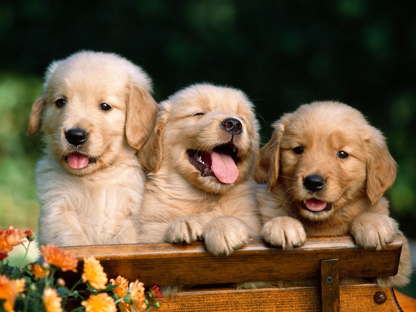3076 download wallpaper Animals, Dogs screensavers and pictures for free