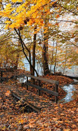 129591 скачать Желтые обои на телефон бесплатно, Природа, Осень, Мостики, Деревья, Лес, Листья, Вода Желтые картинки и заставки на мобильный