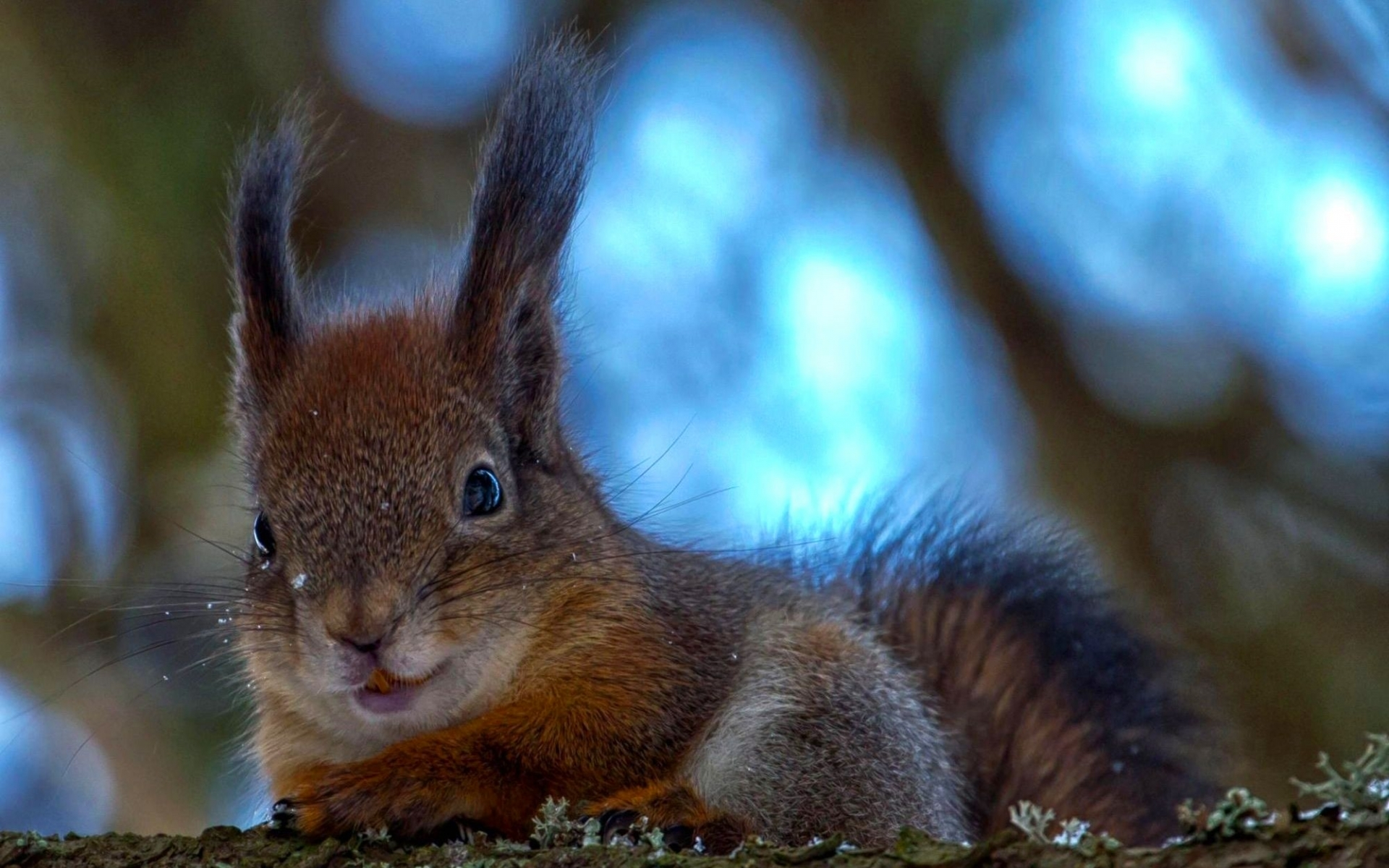 45756 download wallpaper Animals, Squirrel screensavers and pictures for free