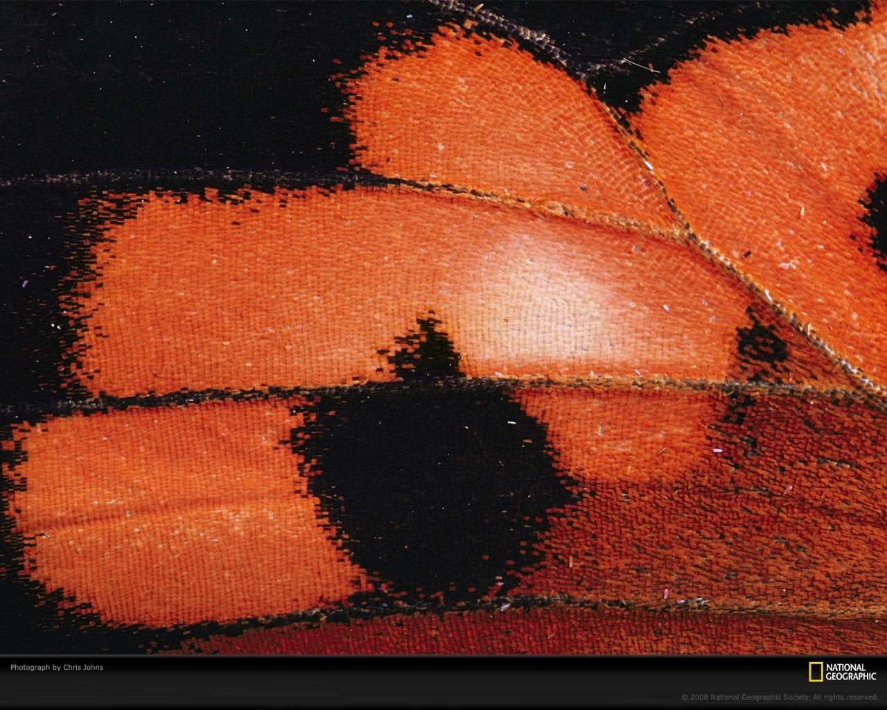 5782 скачать обои Бабочки, Насекомые - заставки и картинки бесплатно