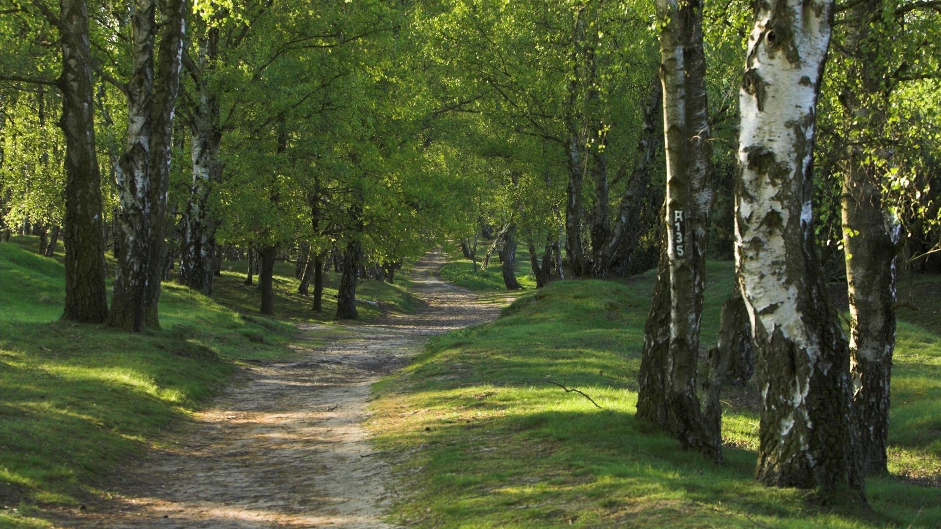 34885 скачать обои Пейзаж, Деревья, Дороги - заставки и картинки бесплатно