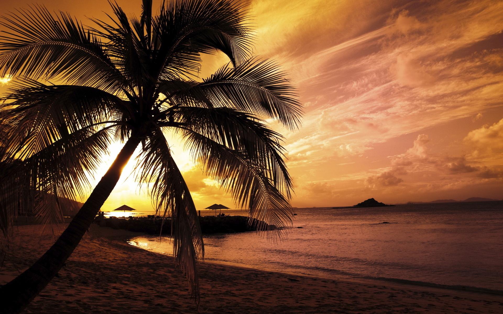31957 papel de parede 540x960 em seu telefone gratuitamente, baixe imagens Paisagem, Pôr Do Sol, Praia, Palms 540x960 em seu celular