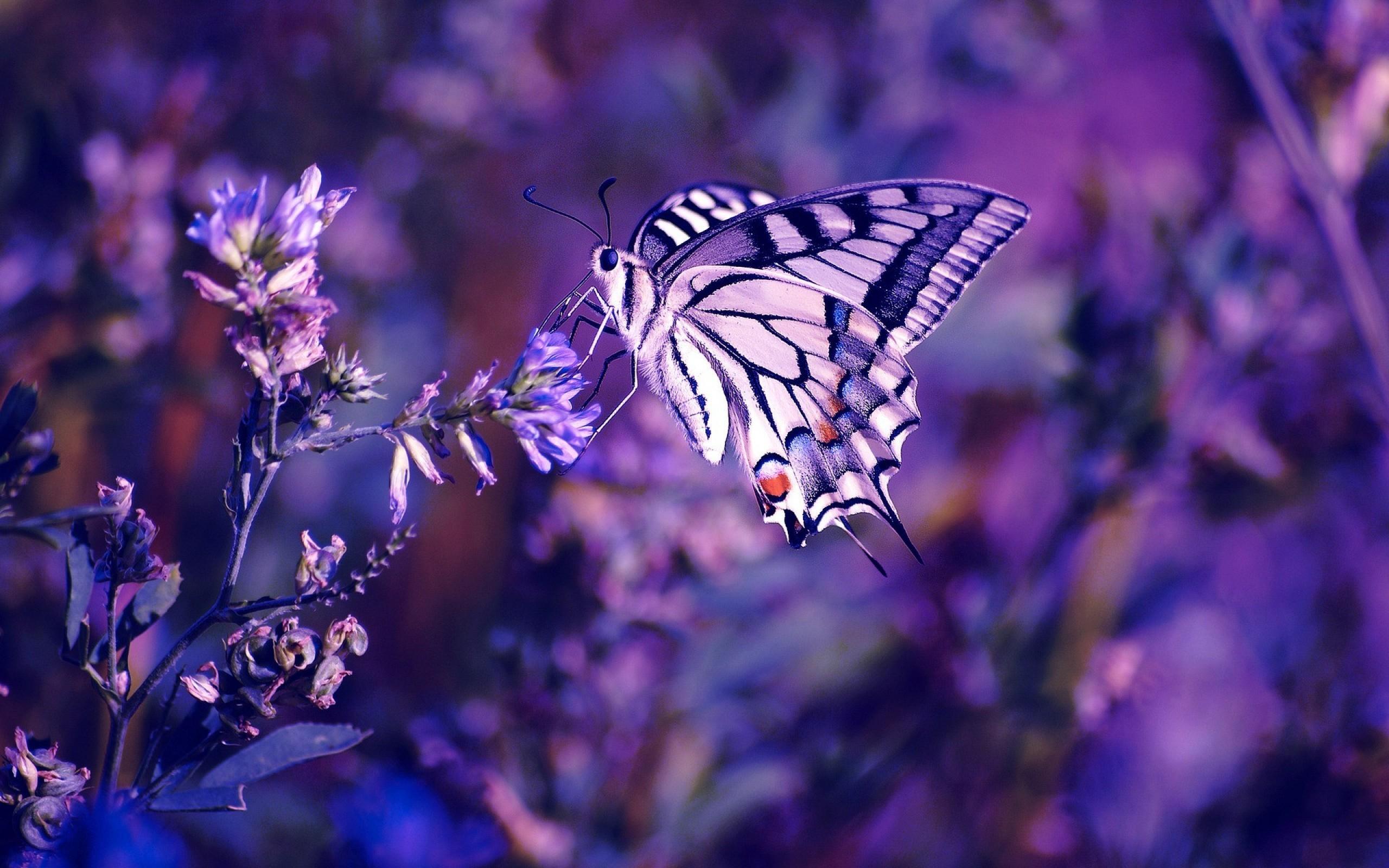 19709 скачать обои Бабочки, Насекомые - заставки и картинки бесплатно