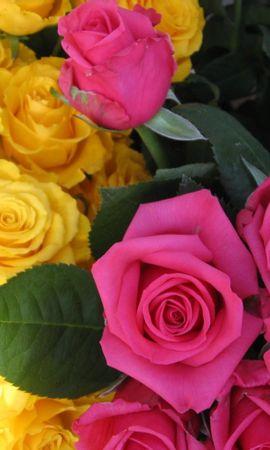 9444 скачать обои Растения, Цветы, Розы - заставки и картинки бесплатно