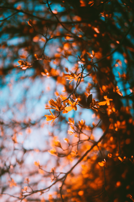77342 скачать обои Природа, Осень, Листья, Размытость, Ветки - заставки и картинки бесплатно