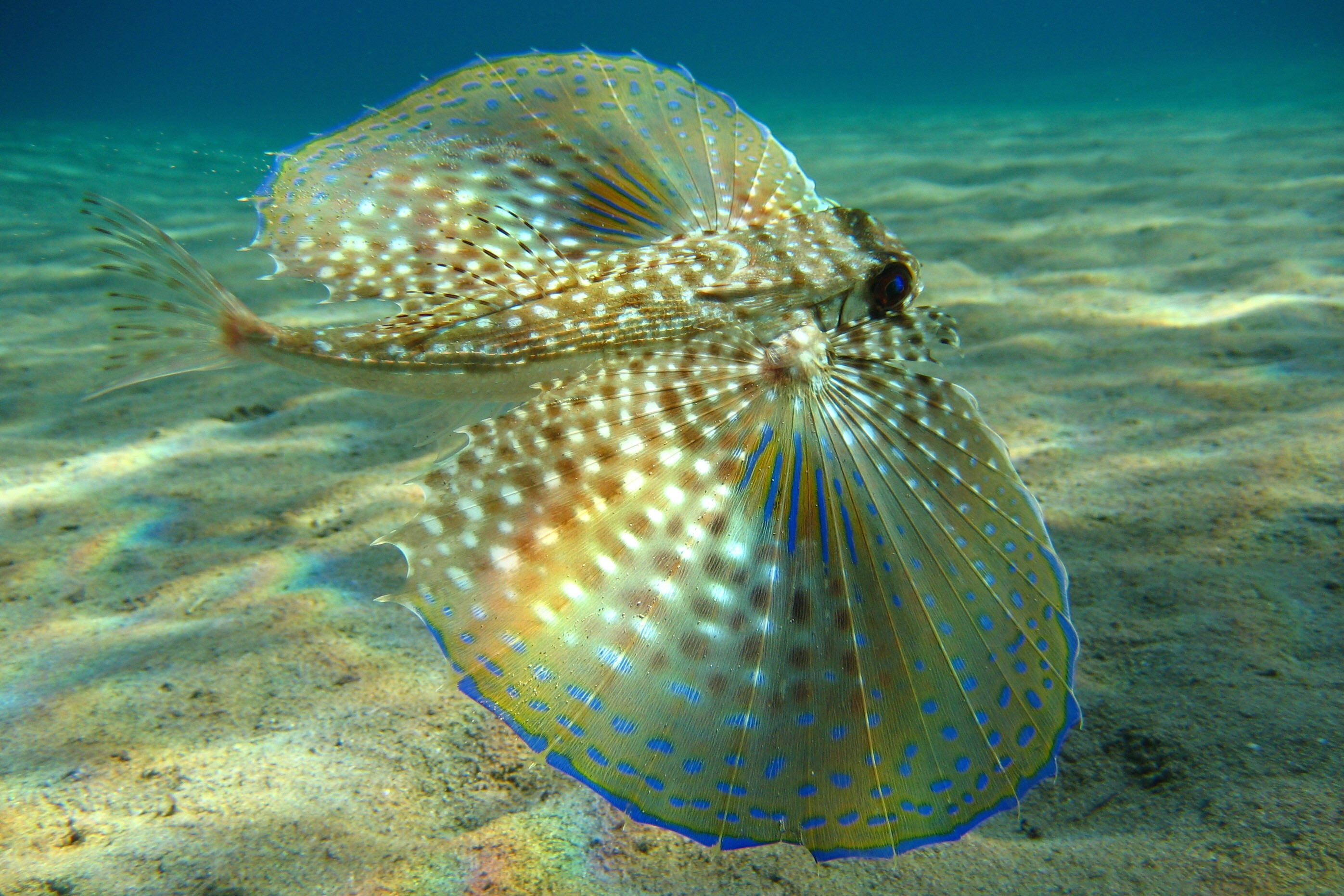 36276 download wallpaper Animals, Fishes screensavers and pictures for free