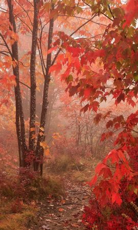 2017 download wallpaper Landscape, Trees, Roads, Autumn screensavers and pictures for free