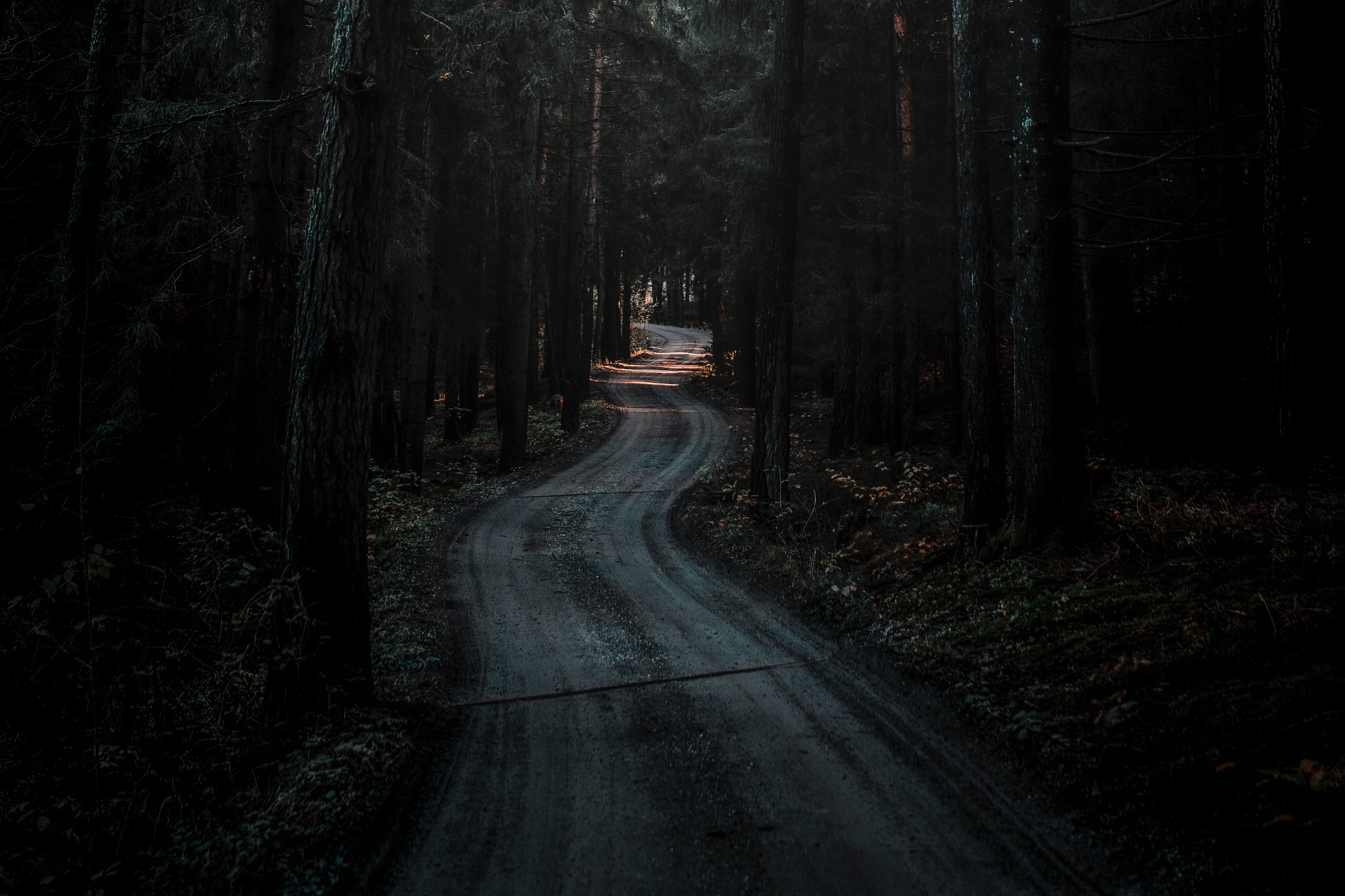 51063 download wallpaper Dark, Nature, Road, Forest, Winding, Sinuous screensavers and pictures for free