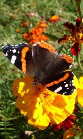 29783 Salvapantallas y fondos de pantalla Insectos en tu teléfono. Descarga imágenes de Mariposas, Insectos gratis