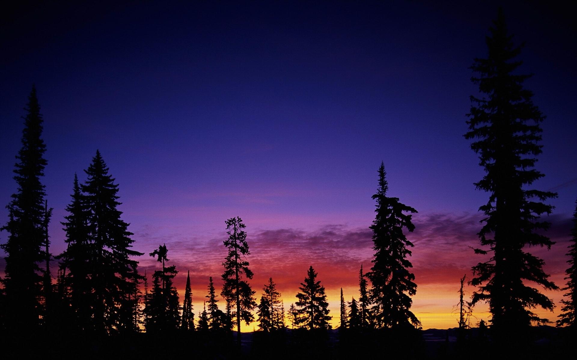 8298 скачать обои Пейзаж, Деревья, Закат, Небо - заставки и картинки бесплатно