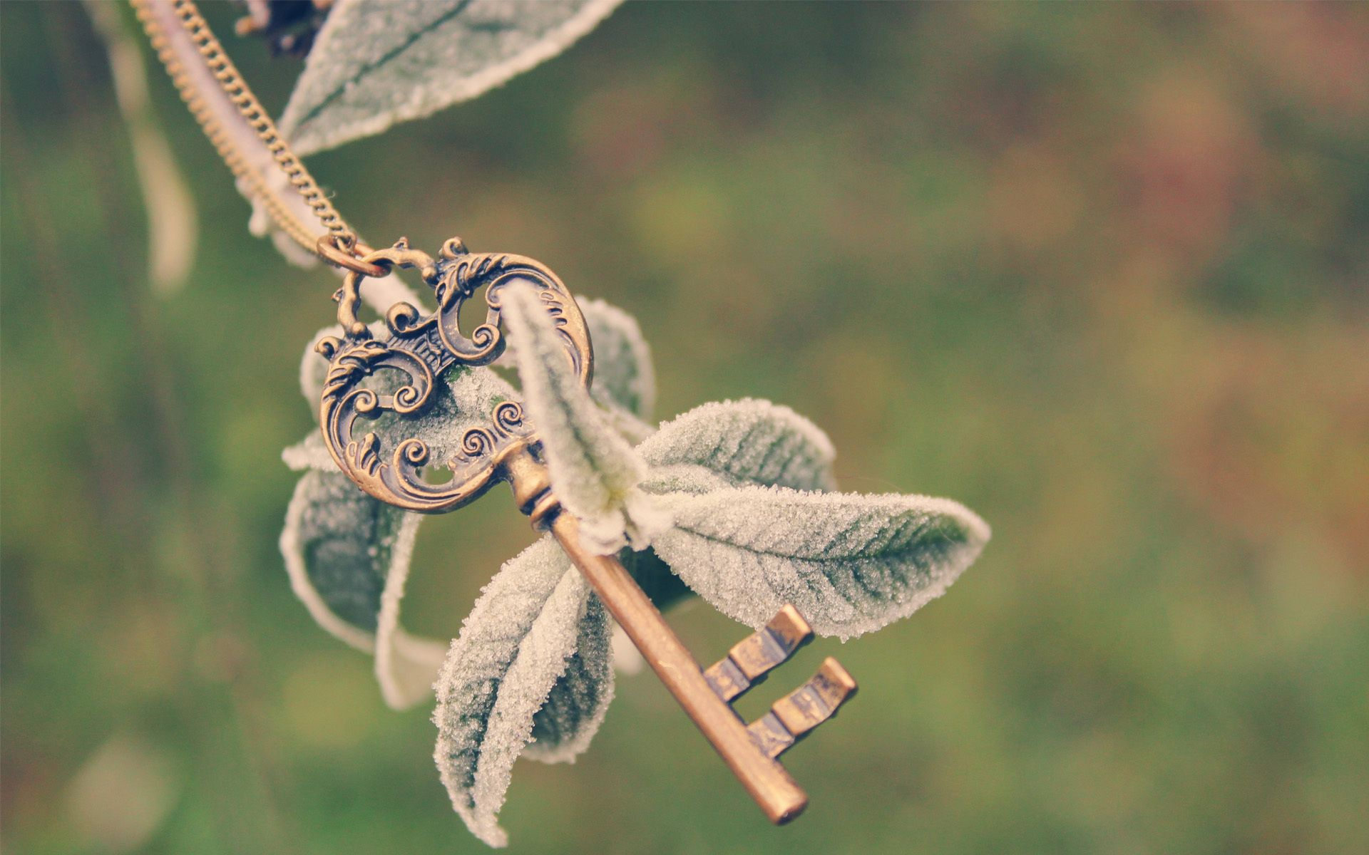 142894 download wallpaper Macro, Key, Plant, Branch, Frost, Hoarfrost, Leaves, Chain, Cold screensavers and pictures for free