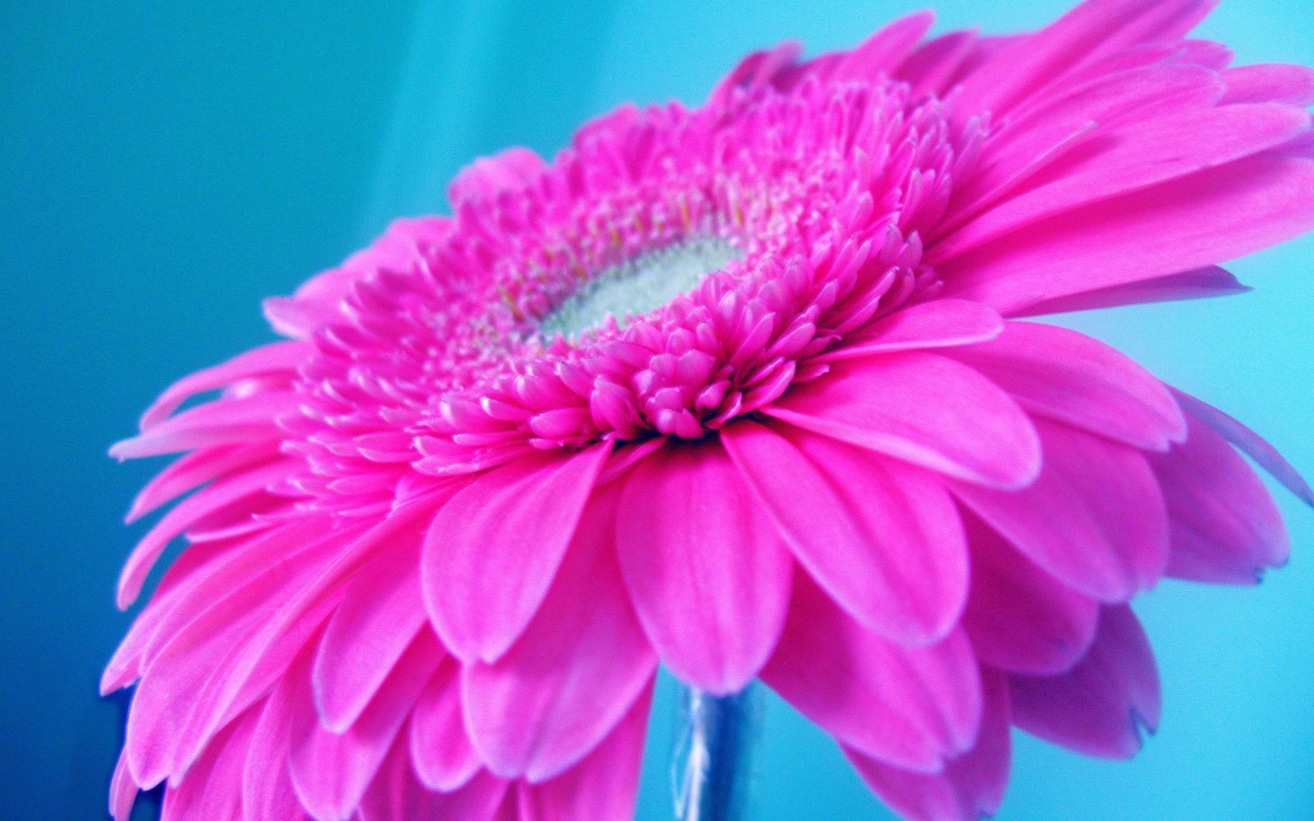 50060 скачать обои Растения, Цветы - заставки и картинки бесплатно