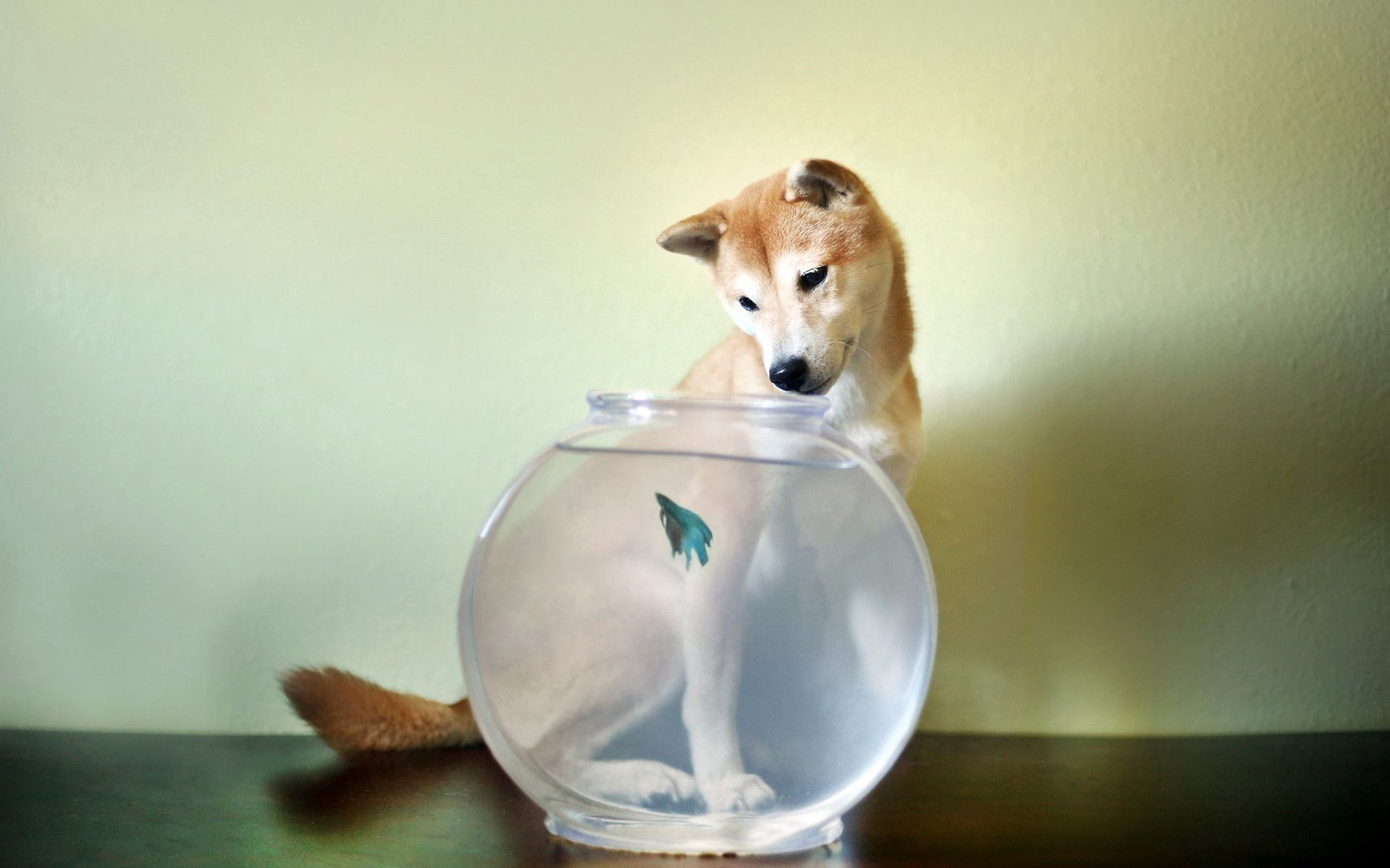 51273 Screensavers and Wallpapers Aquarium for phone. Download Animals, Dog, Aquarium, Small Fish, Fishy pictures for free
